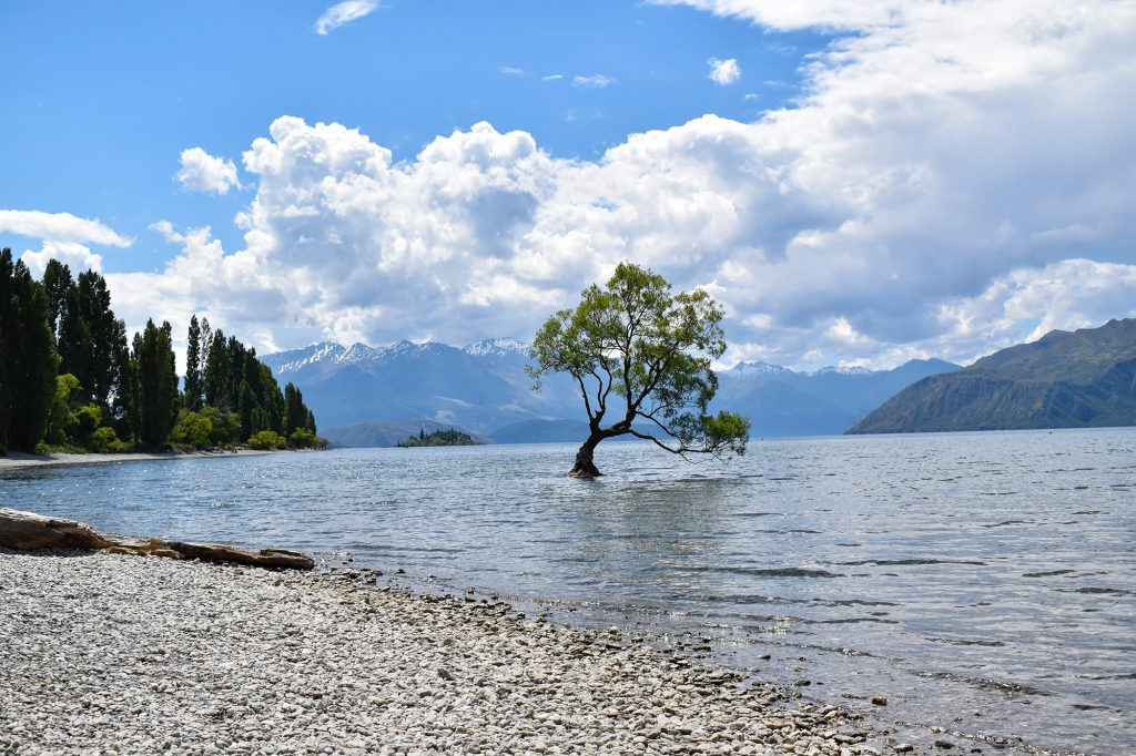 The famous Wanaka Tree is a South Island Instagram hotspot