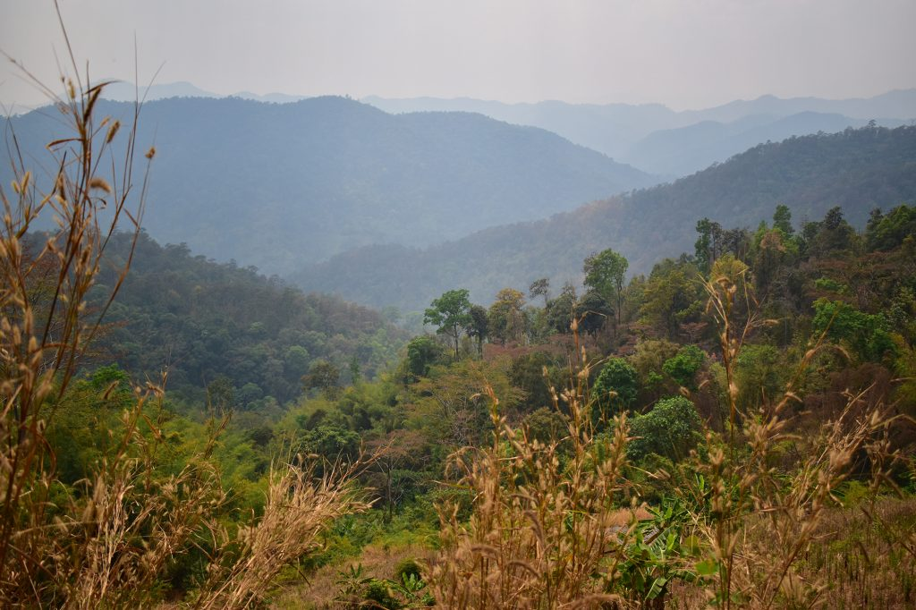 Chiang Mai trekking: breathtaking jungle scenery