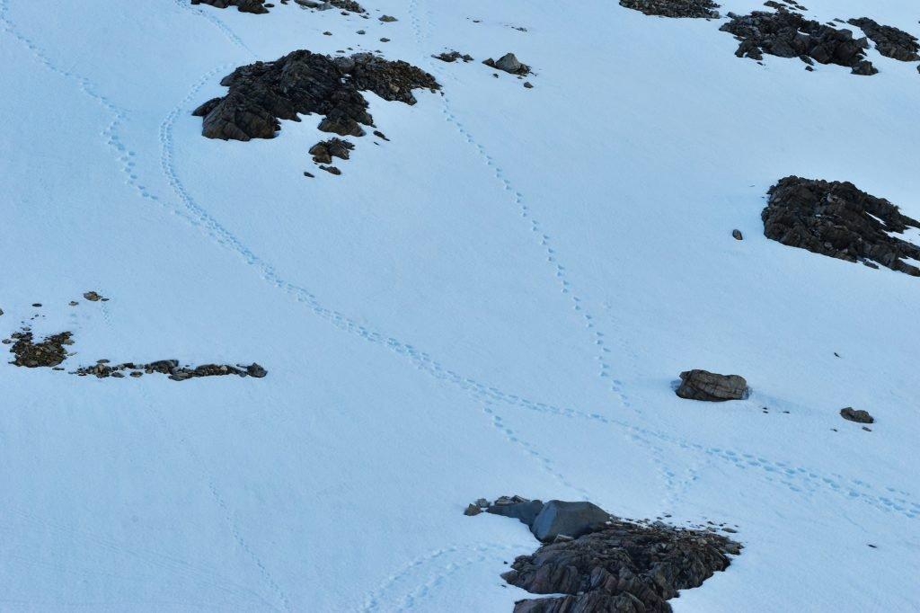 We saw fresh puma prints in the snow at Laguna de los Tres