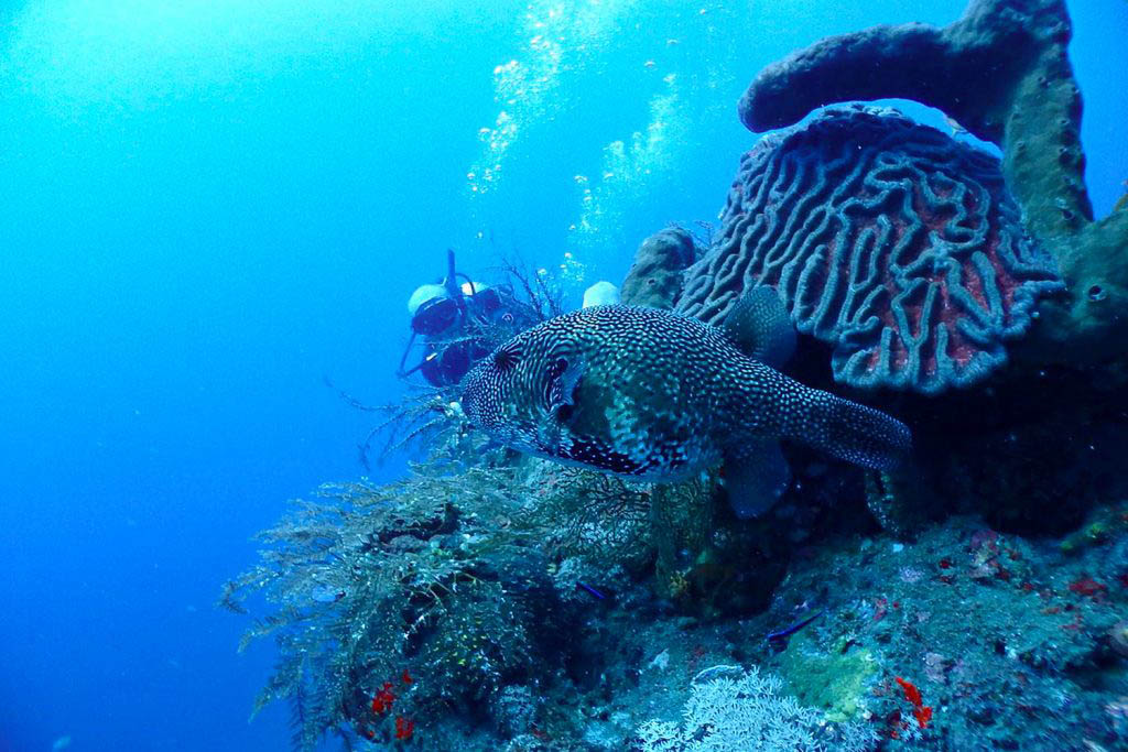 Beautiful marine life in Amed, Bali