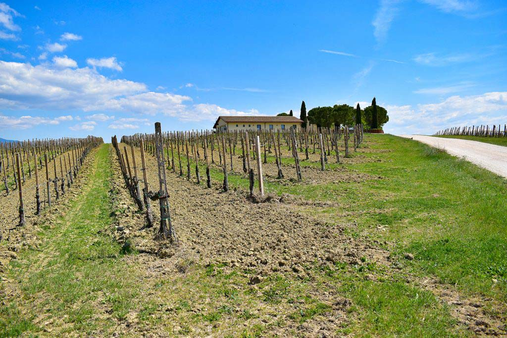 Cantina Le Cimate, founded in 2011, is one of the newest wineries in the Montefalco area