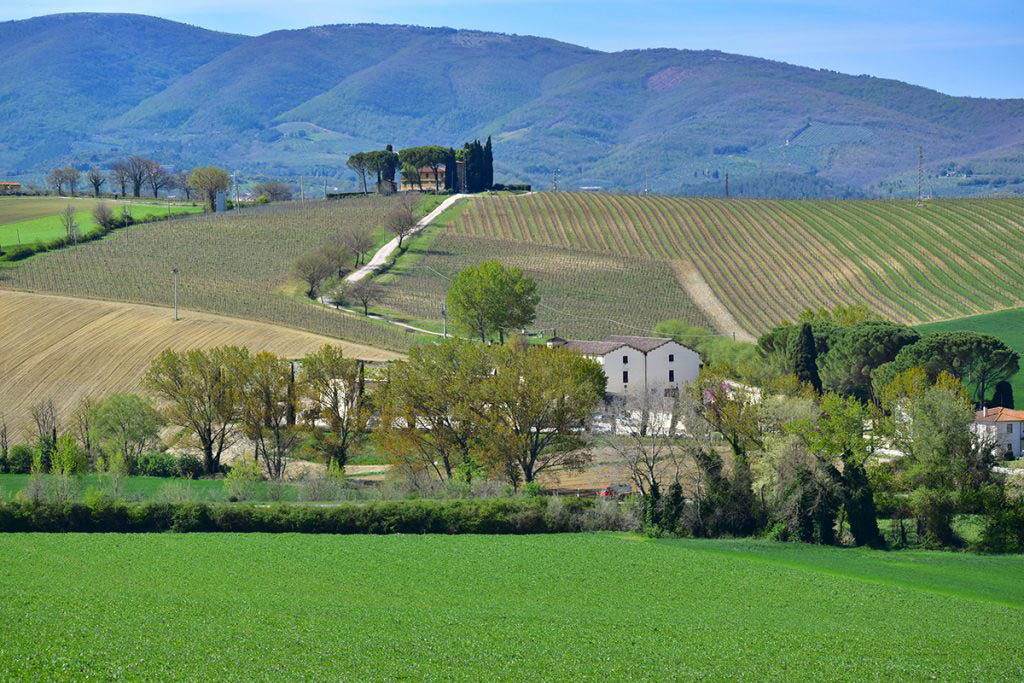 Scacciadiavoli's site is built into a sloping hillside, allowing winemakers to harness the power of gravity in its production cycle