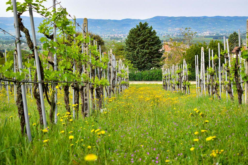 Tili Vini, located just outside Assisi on the slopes of Monte Subasio, is one of the best wineries in Umbria