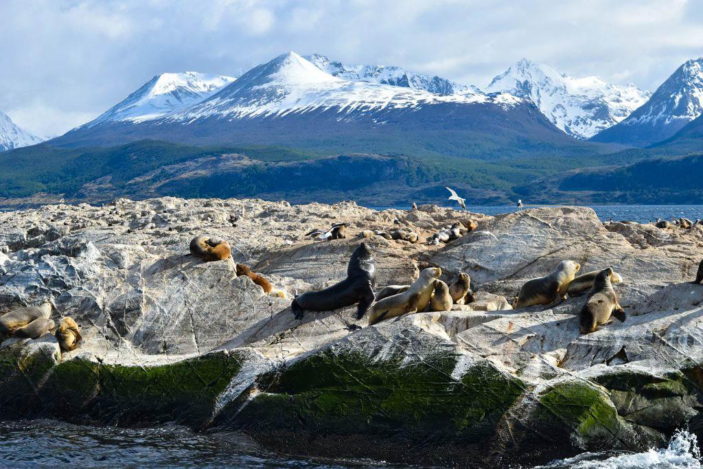 Sea lions on Beagle Channel cruise Ushuaia