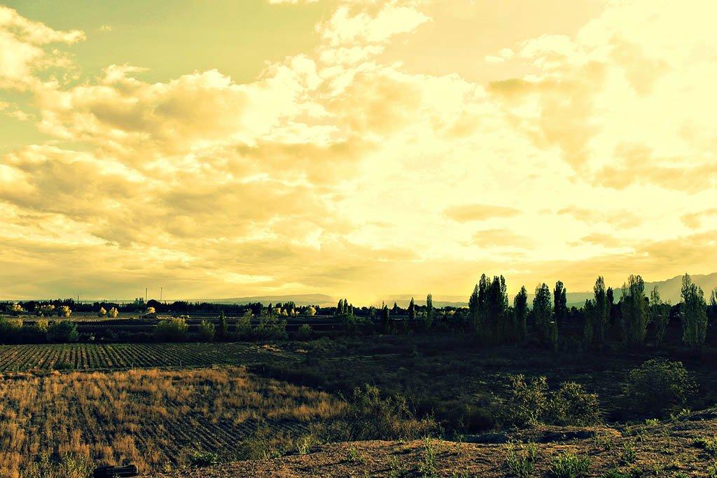 Mendoza vineyards Argentina