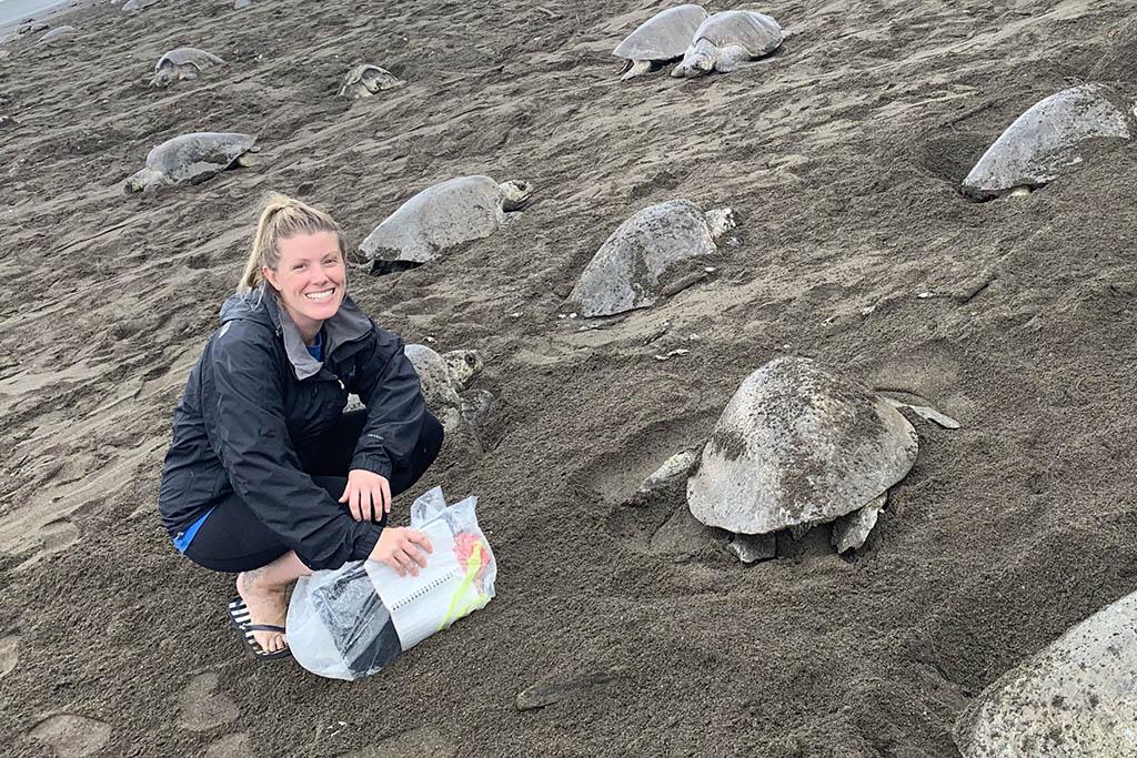 Michelle Matthews turtles