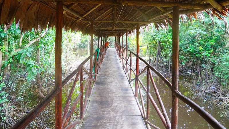 Amazon Lodge bridge Peru