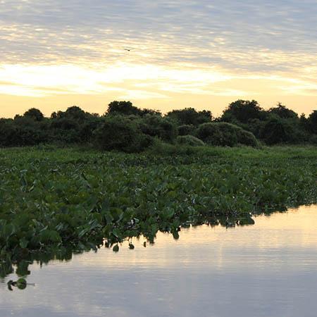 Pantanal Brazil wetlands