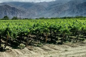 Argentina vineyards best times to visit