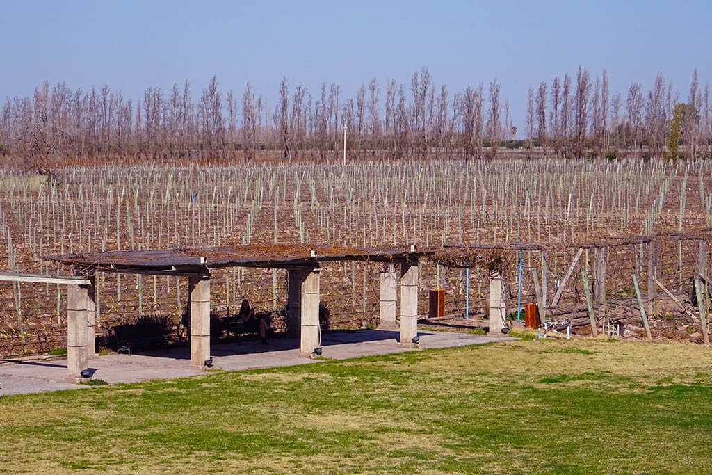 Mendoza vineyards in August