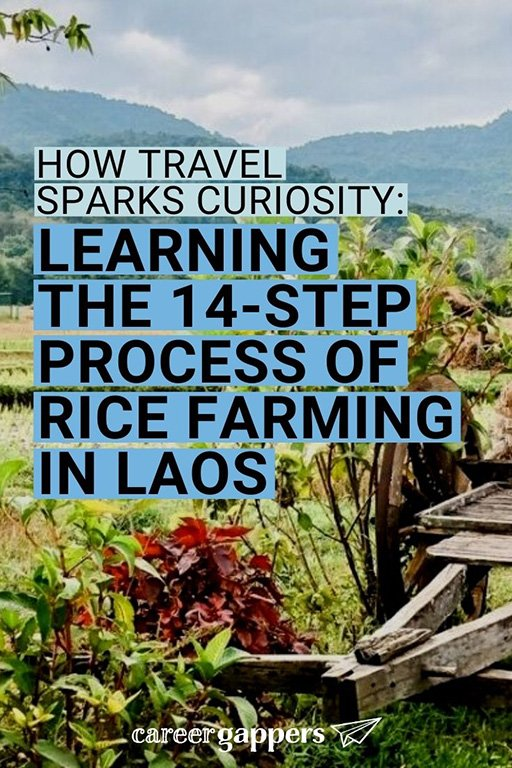 Travel sparks curiosity, a skill that's invaluable at work. Sam writes what she learned about the process of rice farming in Luang Prabang, Laos. #ricefarming #luangprabang #careerskills #curiosity #laos