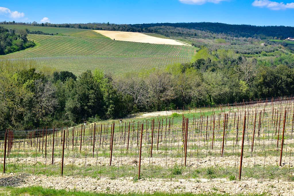 Umbria vineyards valleys