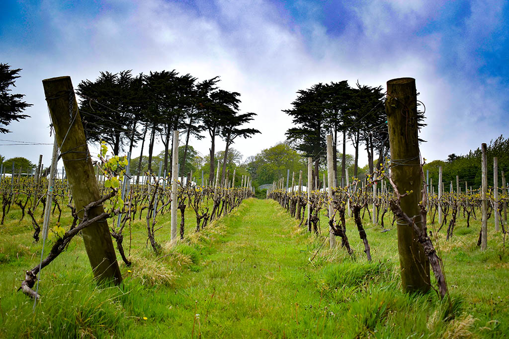 Things to do in Penzance: Polgoon Vineyard